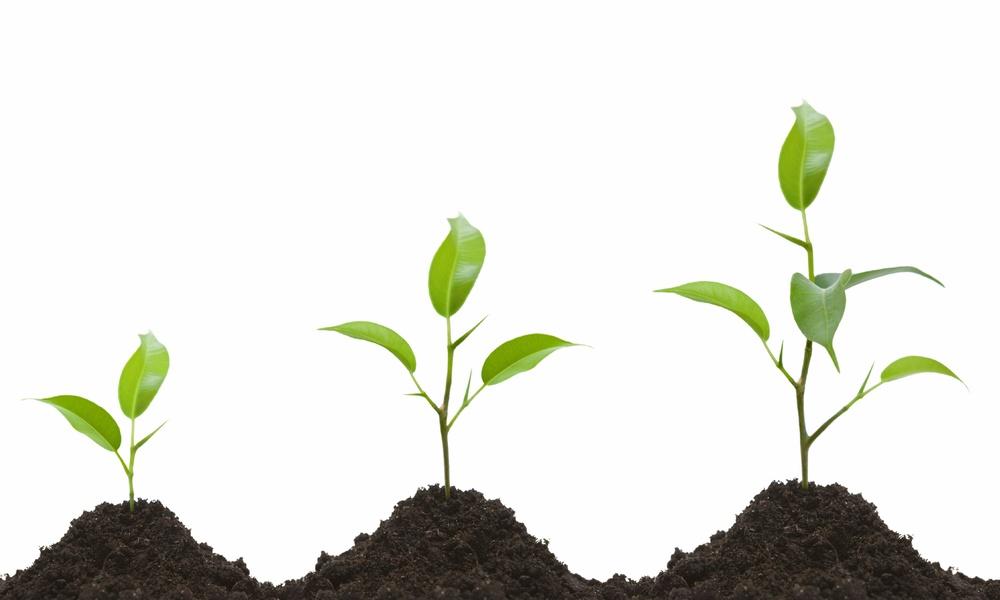 Growing-Up-Flower-Pot